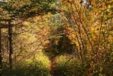 High_Falls_Pigeon_River_013_09272015 - The trail then branched off of the boardwalk and went into this primitive path flanked by trees with leaves turning color