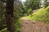 Hintertux_378_07182018 - The Schleierfall Trail continued its relentless ascent through this forested area though it was by no means empty of people