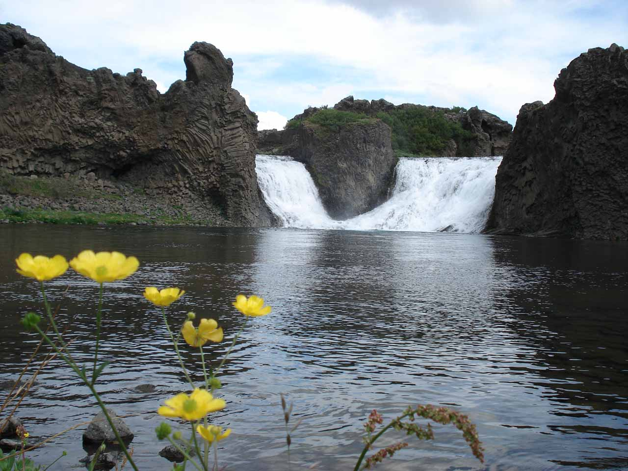 We saw some wildflowers blooming by the plunge pool