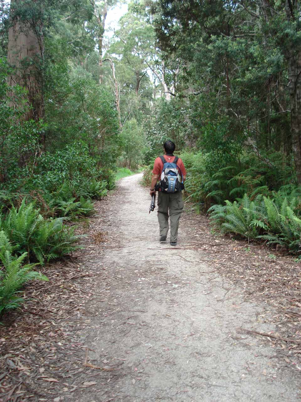 That's me on the lush forest walk towards Hogarth Falls