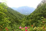 Hollentalklamm_316_06262018 - Colorful look back into the valley from the entrance to the Hoellentalklamm Gorge