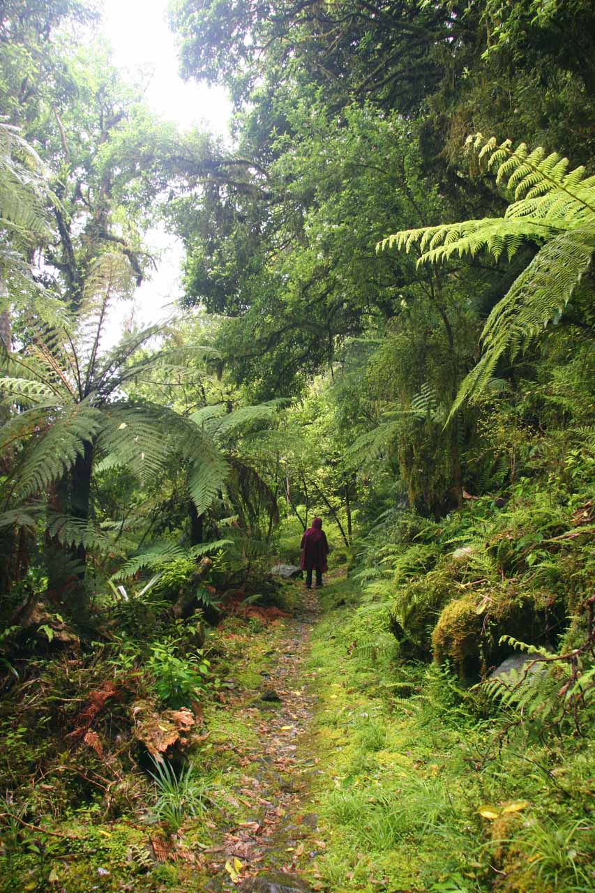 Julie now on the bush track surrounded by lush ferns attesting to just how rainy it gets here