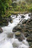 Hollyford_Track_028_12242009 - A loud cascade en route to Hidden Falls along the Hollyford Track