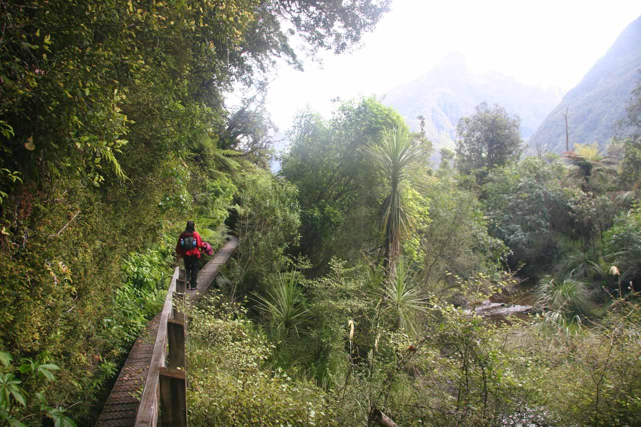 Back at the boardwalk as we were going around and over some real swampy areas alongside the Hollyford River
