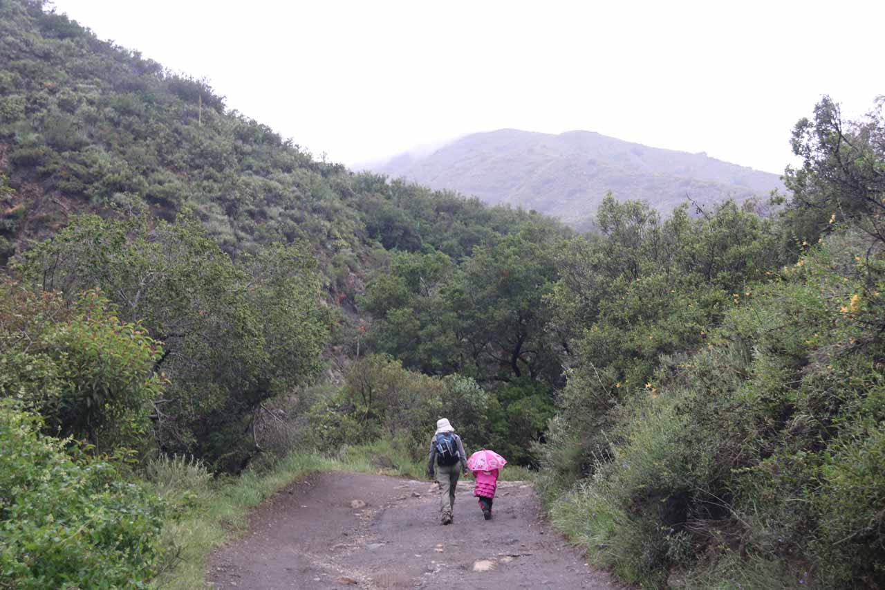 Hiking to Holy Jim Falls during light rain