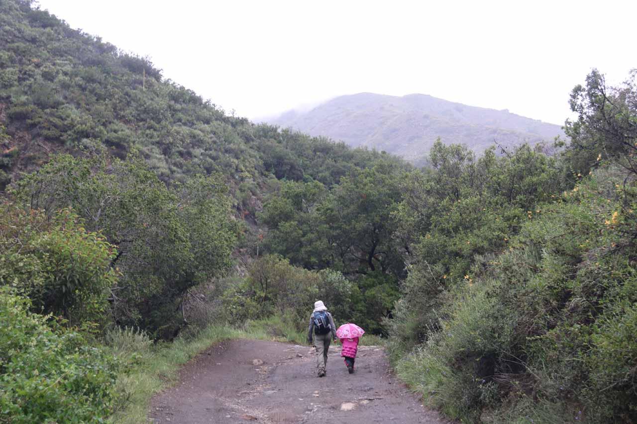 Hiking to Holy Jim Falls during light rain