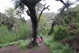 Holy_Jim_Falls_057_04102016 - Julie and Tahia going past some notable trees along the way to Holy Jim Falls