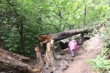 Holy_Jim_Falls_080_04102016 - Tahia was short enough that she was able to fit underneath this fallen tree obstacle