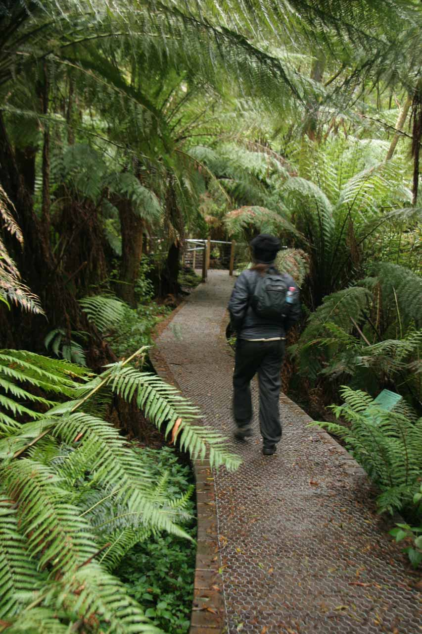 Walkway through tall ferns leading to the base of Hopetoun Falls