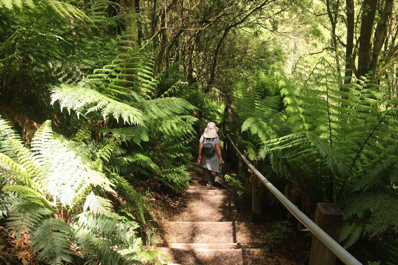 Julie descending towards the Aire River for a closer look at Hopetoun Falls