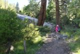 Horsetail_Falls_014_06222016 - Mom on the initial part of the trail to Horsetail Falls, which was fairly easy to follow as it meandered through this small forest with the odd granite slab strewn about here and there
