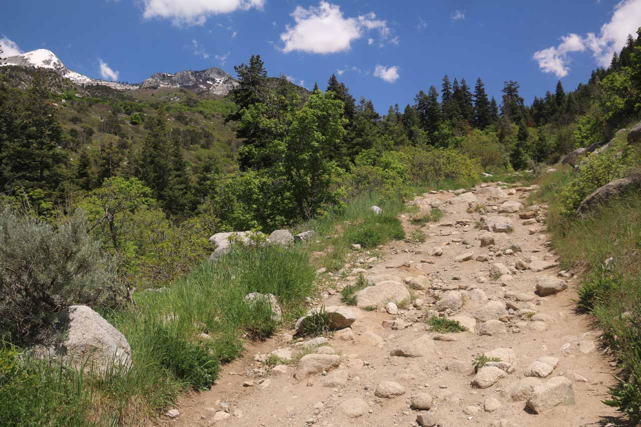 A large part of the Horsetail Falls Trail contained lots of rocks, which could result in a twisted ankle if not careful