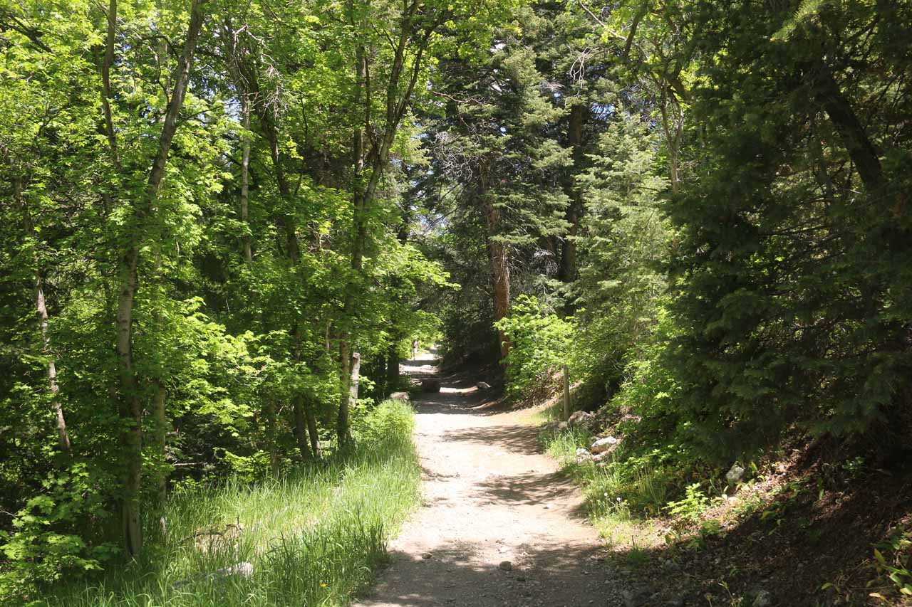 Eventually, the trail entered forested terrain, which provided some partial shade for some temporary relief from the hot sun
