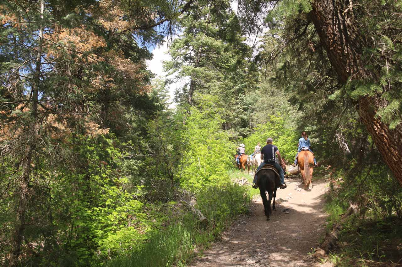 Looking back at some horseback riders on the trail