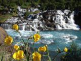 Hraunfossar_019_jx_06232007 - Some wildflowers blooming before the Hraunfossar waterfall