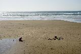 Hug_Point_063_04062021 - Tahia enjoying herself on the beach at low tide as seen from the Hug Point Waterfall