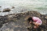 Hug_Pt_036_06232021 - Tahia having a field day molesting sealife at Hug Point