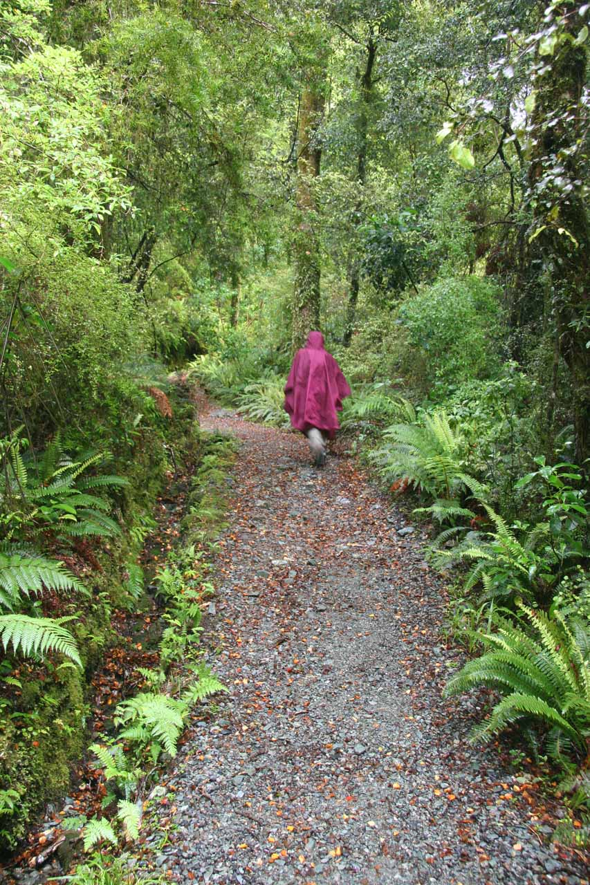 Julie on the lush bush track in the rain as we returned to Humboldt Falls five years later in December 2009