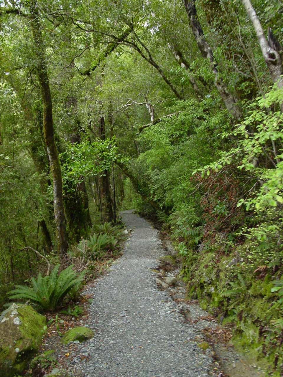 On the established track to Humboldt Falls