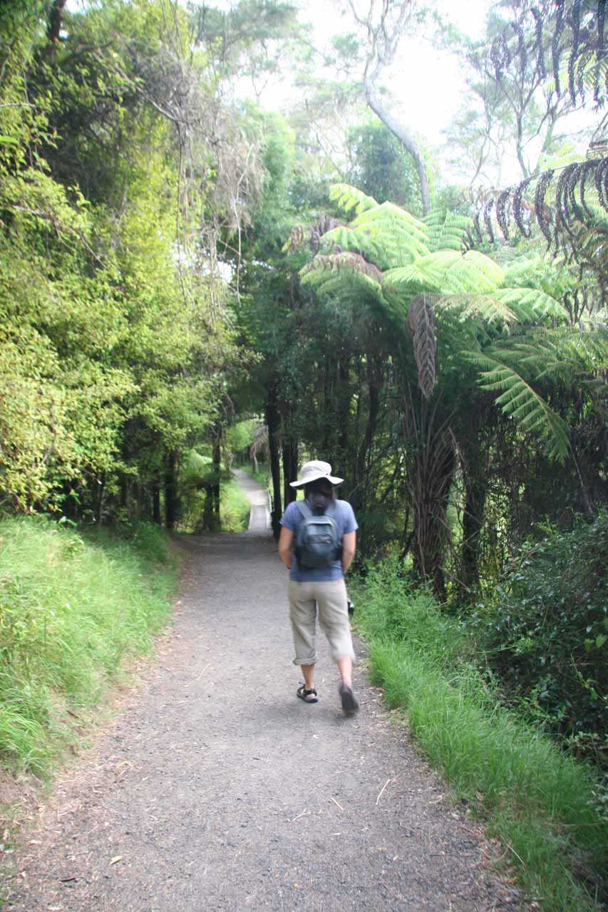 Julie on the short walking track to get to the plunge pool of Hunua Falls after crossing the bridge