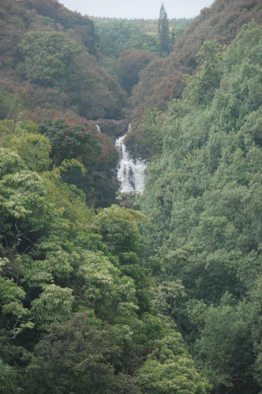 Focused on just the Lower Umauma Falls
