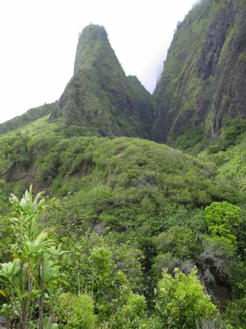 Iao_Needle_008_08312003 - Further to the south of Lower Makamaka'ole Falls and other waterfalls this side of West Maui was the 'Iao Valley, whose most popular feature was the 'Iao Needle shown here