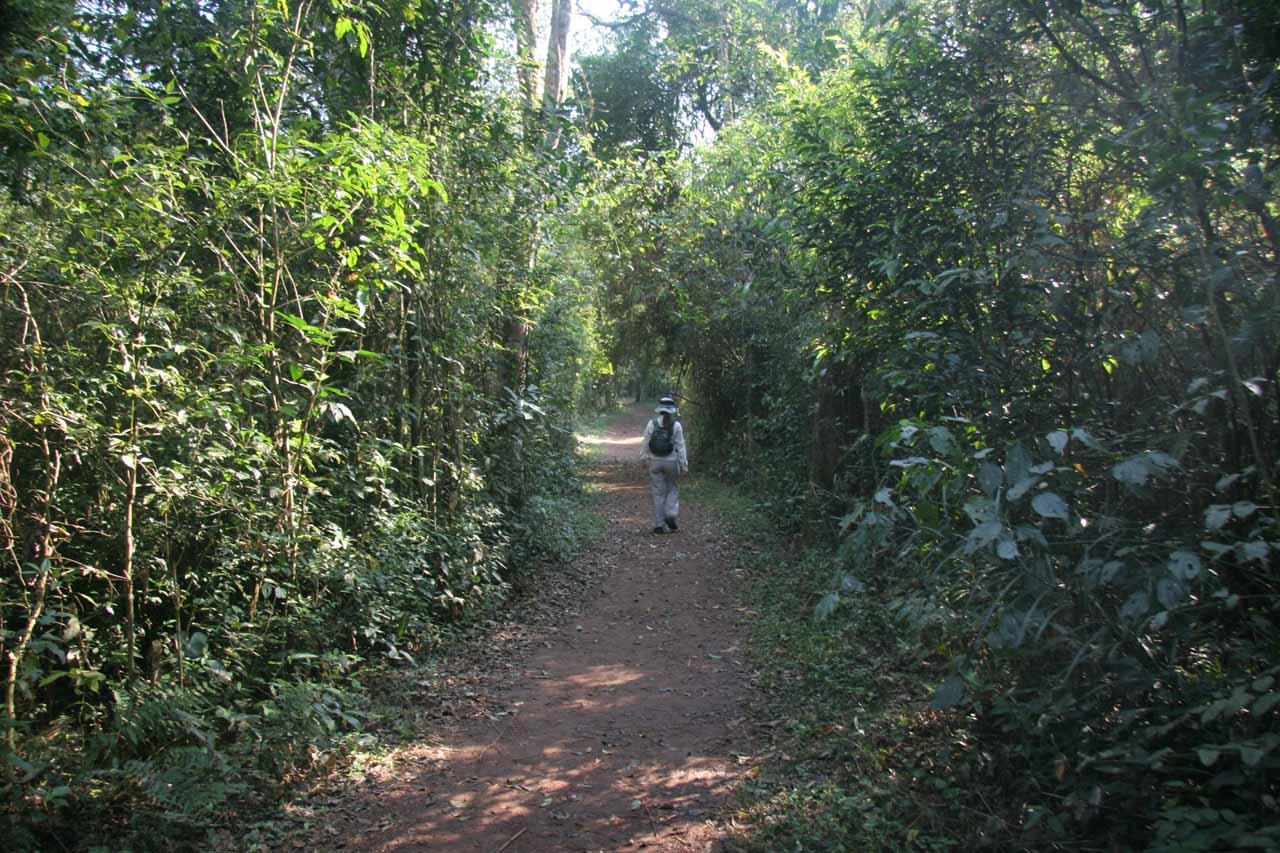Walking through lush jungle along Sendero Macuco