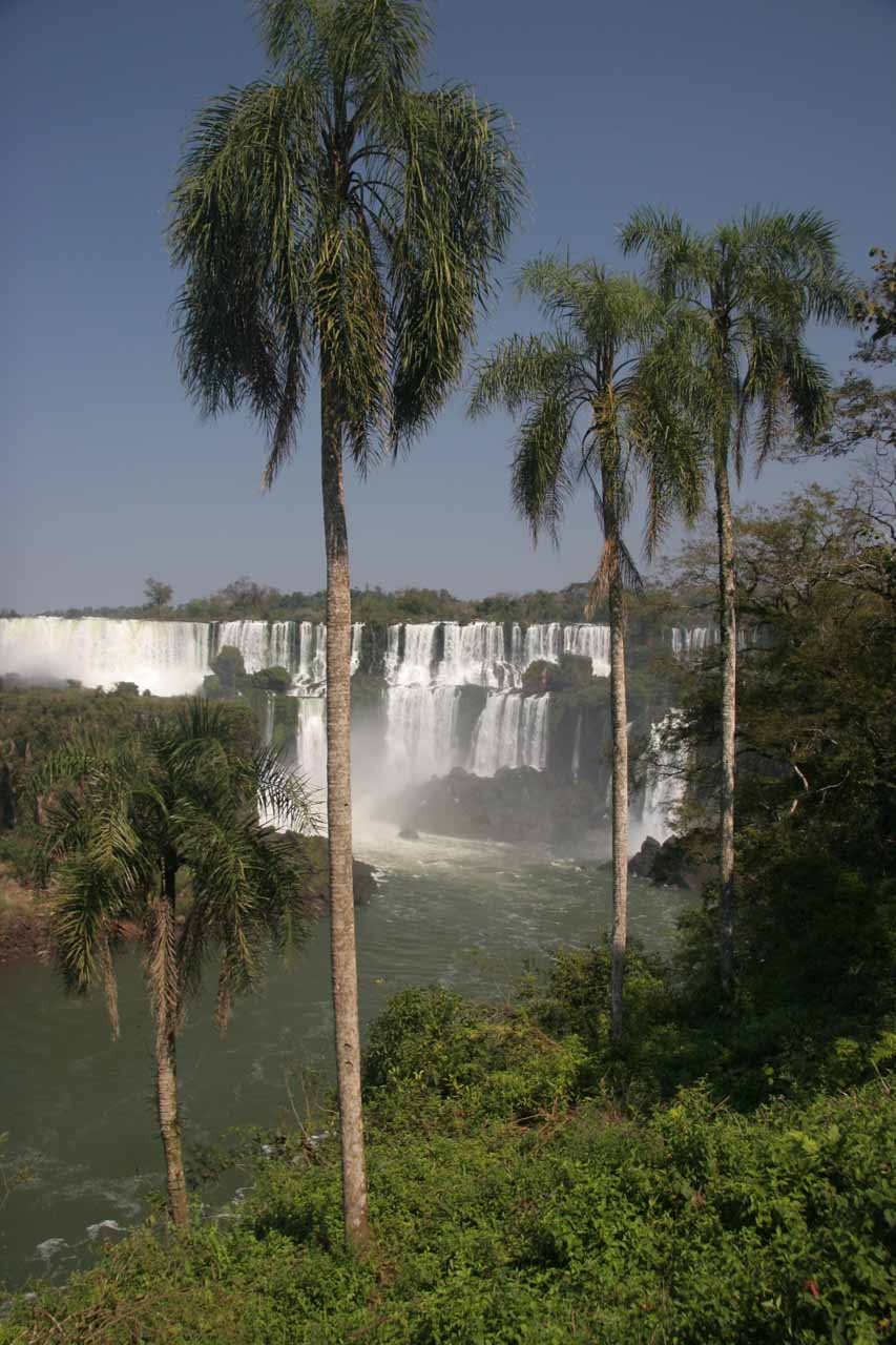 Palm trees framing Iguazu Falls on the Argentina side from a very popular lookout spot