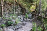Ile_des_Pins_069_11262015 - One of the rough patches of the hike to the Piscine Naturelle via the garden path