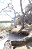 Ile_des_Pins_638_11272015 - Looking towards some exposed roots of trees that might be on the verge of toppling over at Kanumera Bay