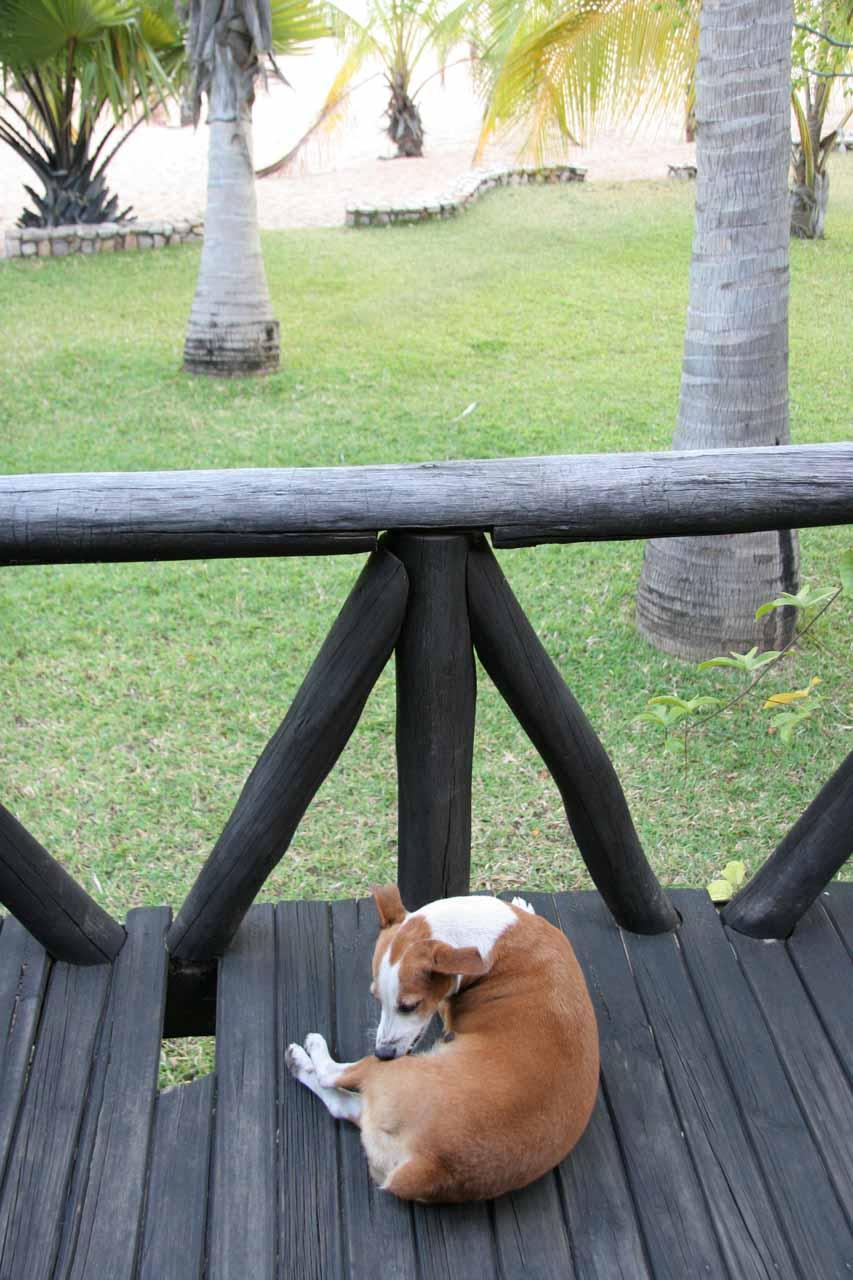 Buffy greeting us in the morning at Isanga Bay