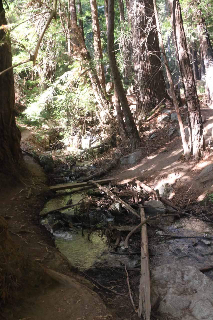 A small creek crossing around the part where the Canyon Falls Trail started to get re-routed and a little confusing