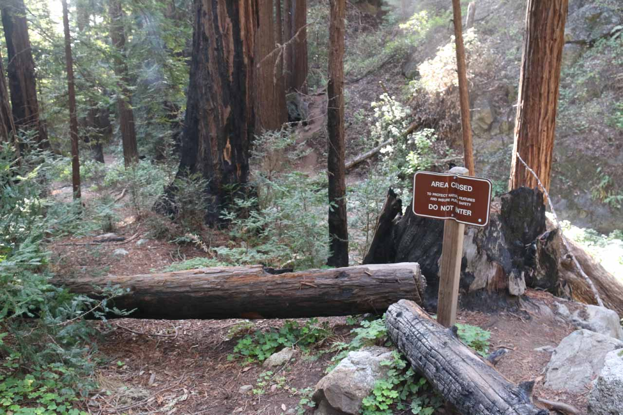 This sign hinted at why the trail to Canyon Falls was a little confusing given the re-routing that was done in an attempt to avoid the fire-damaged parts