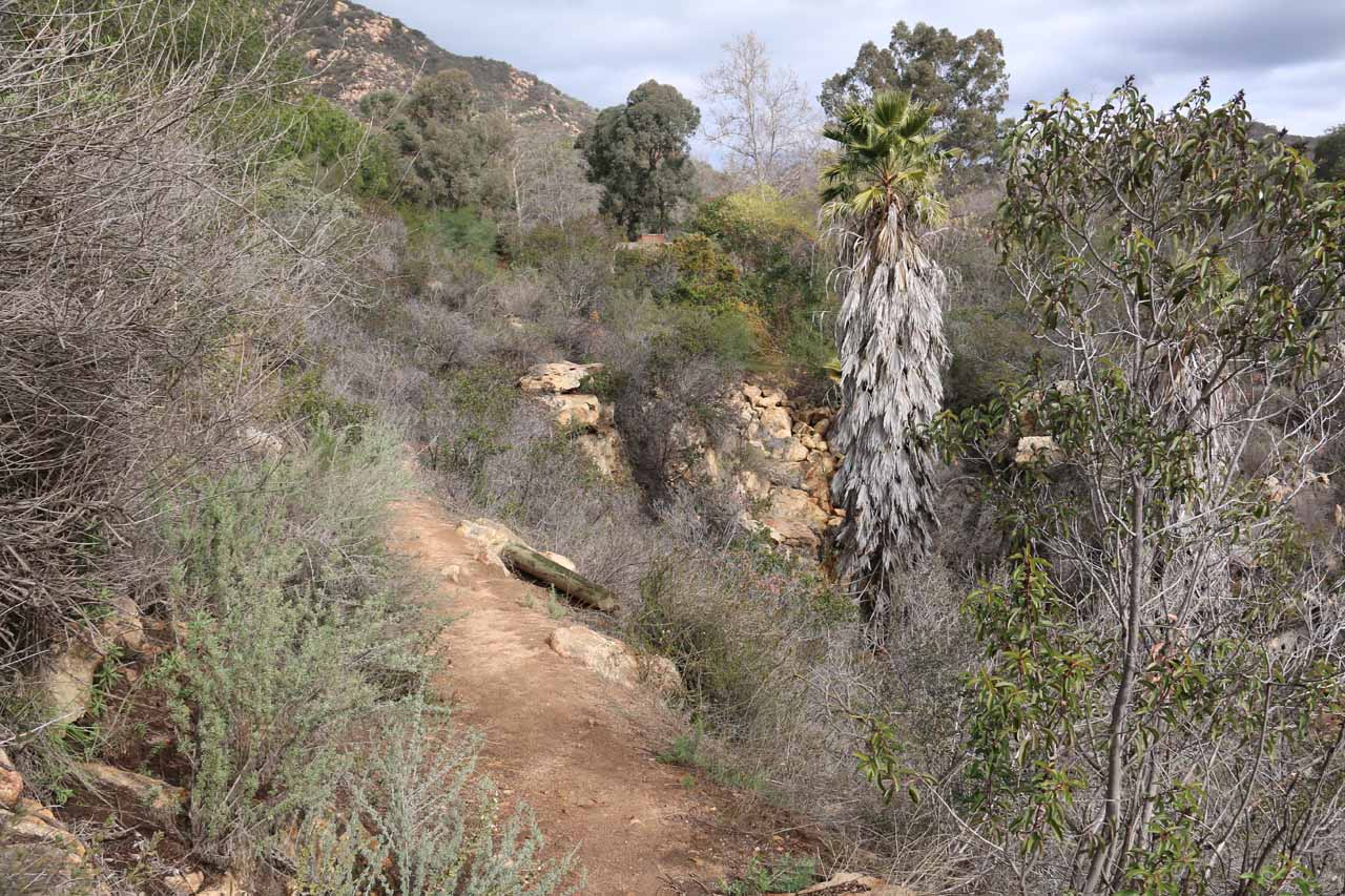 Context of the trail and the ravine containing Jack Creek Falls