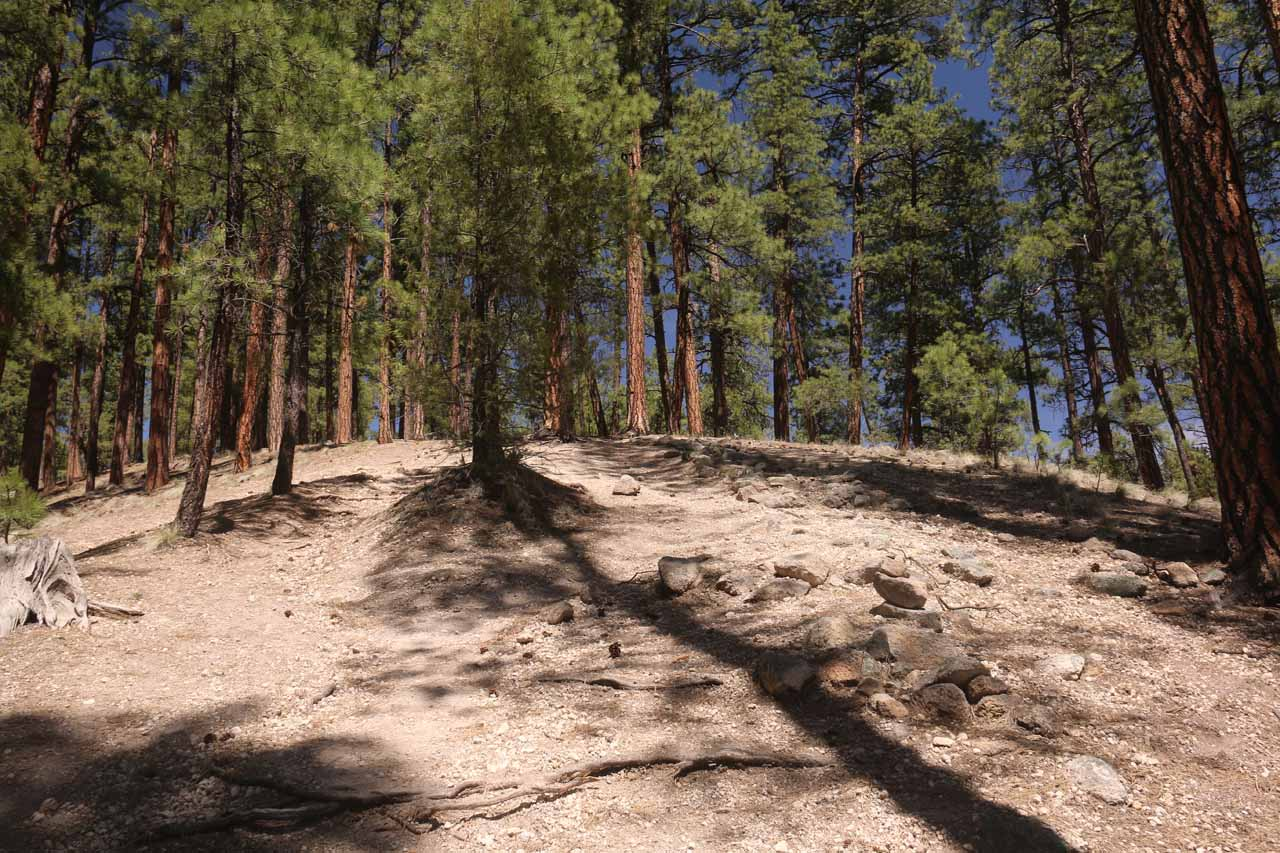 This was the uphill slope that I followed right after leaving the Jemez Falls Overlook