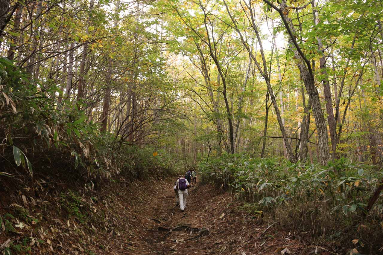 Mom and Dad following the forested trail where the koyo hadn't quite arrived at the lower elevations