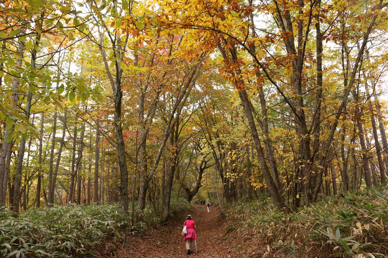 At this point of the hike, we started to see more yellows and hints of orange