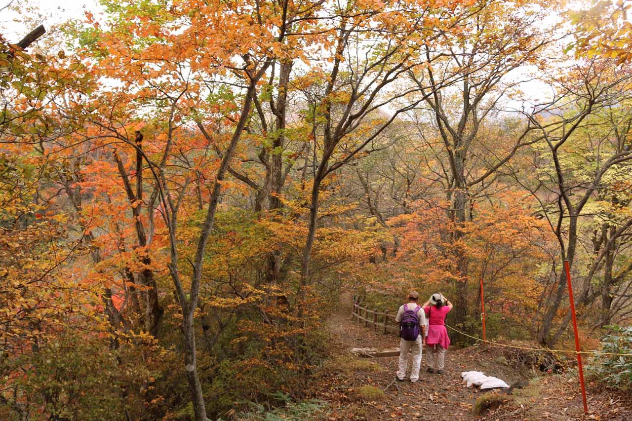 Mom and Dad really enjoying the koyo along the trail