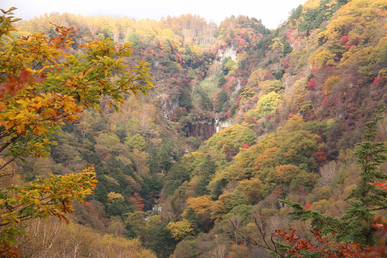 This was our first glimpse of Jofu Falls on the trail, but the koyo really made our experience on this hike