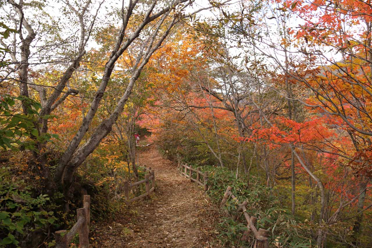 The return hike allowed us to experience the koyo all over again
