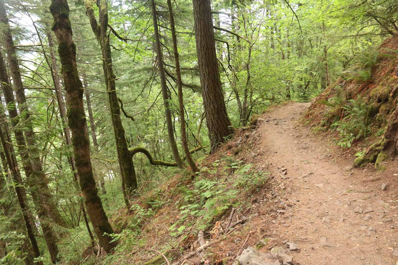 Near the apex of the climb, the trail started to round a bend as it entered the gorge carved out by McCord Creek