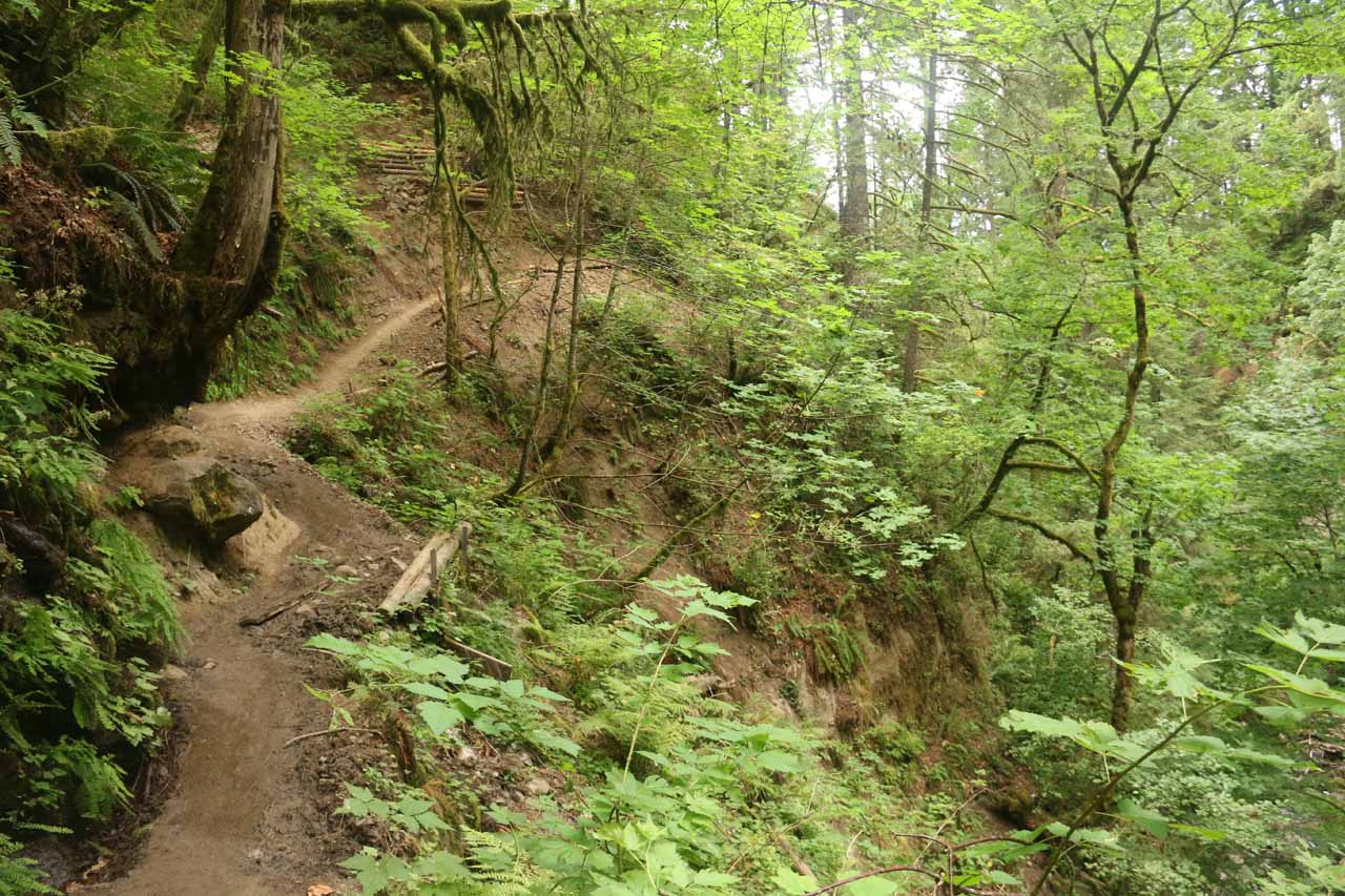 Looking back at some of the narrower stretches of the Elowah Falls Trail