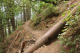 John_B_Yeon_SP_061_08172017 - Going over some pipe on the way up to the Upper McCord Creek Falls, but I wasn't sure what the function of this pipe was