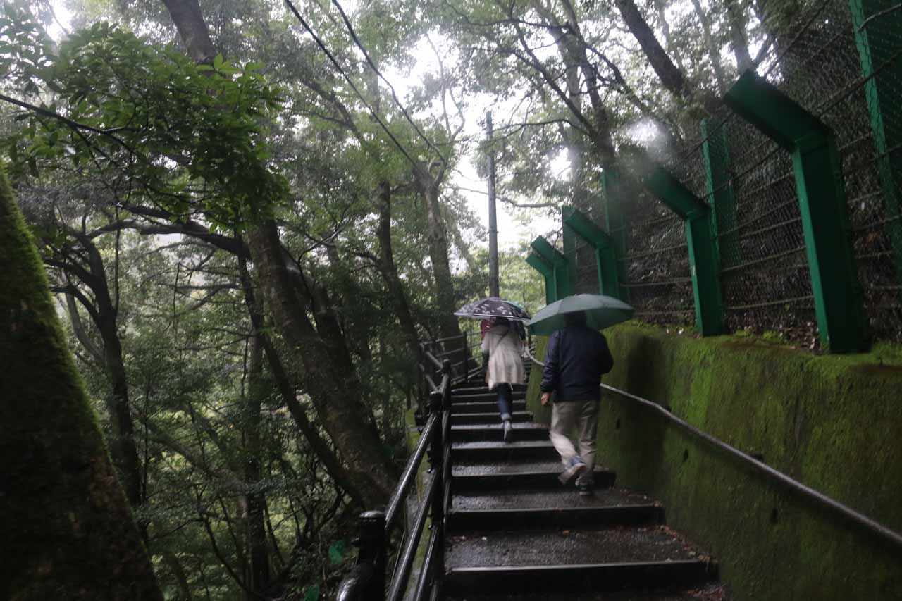 After having our fill of the Joren Falls, we then went back up the steps to the car park