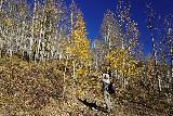 Judd_Falls_067_10162020 - Julie and I were quite surprised to see this grove of aspen trees along the Judd Falls Trail still had their leaves and put on a colorful display for us that contrasted well with the deep blue skies