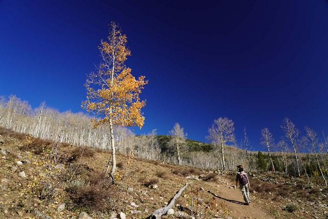 Judd_Falls_077_10162020 - Julie walking past one of the few trees still holding onto their aspen leaves while hiking the Judd Trail. As you can see in the background, pretty much all of the aspen trees had lost their leaves by mid-October 2020