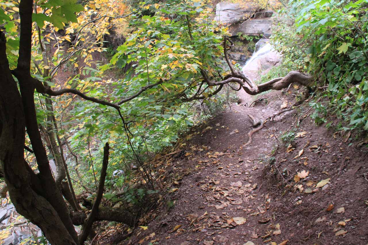 This section was a little overgrown and narrow with still the everpresent long dropoff on the left