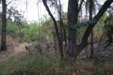 Kabweluma_Falls_006_05302008 - Finally at the Kabwelume Falls trailhead