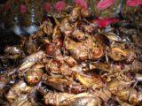 Kad_Tung_Kwian_004_jx_12302008 - Grasshoppers as food