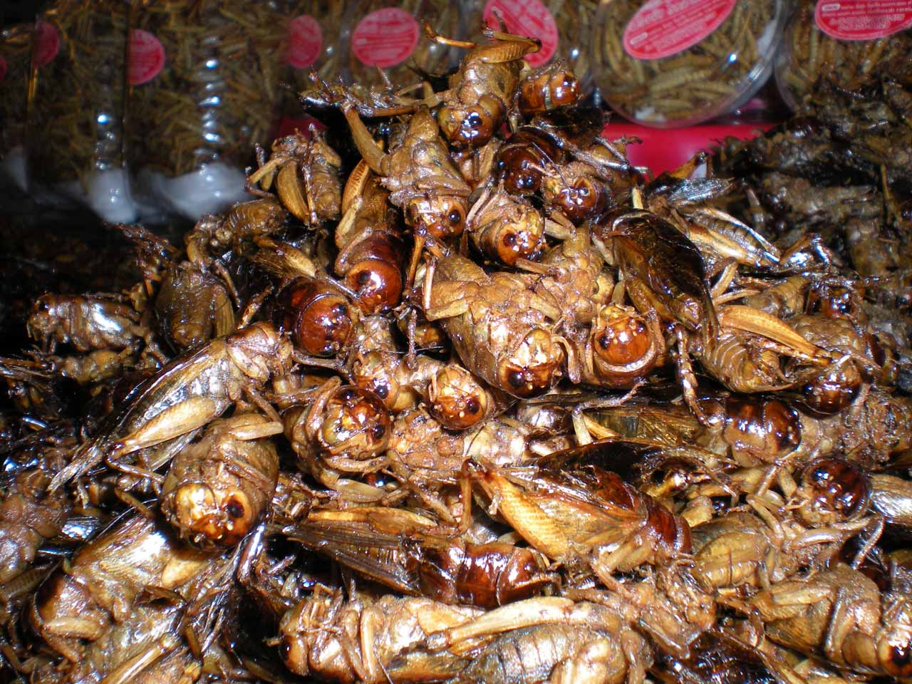 Grasshoppers as food